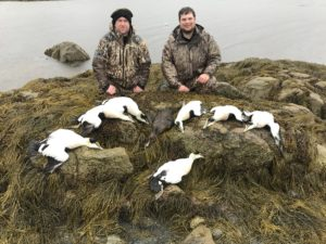 maine sea duck hunting
